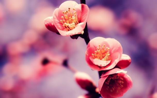 Big 7356 oboi velikolepnyj cvetok