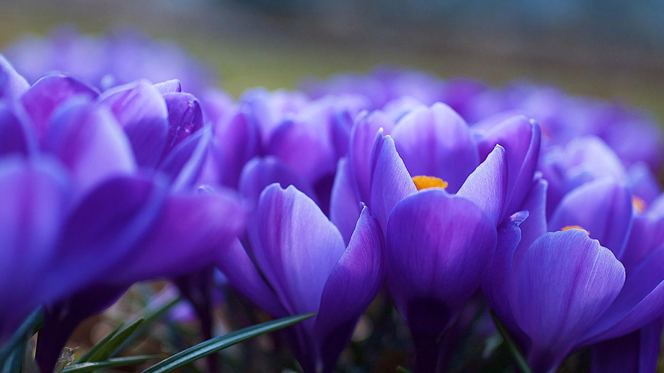 flowers79