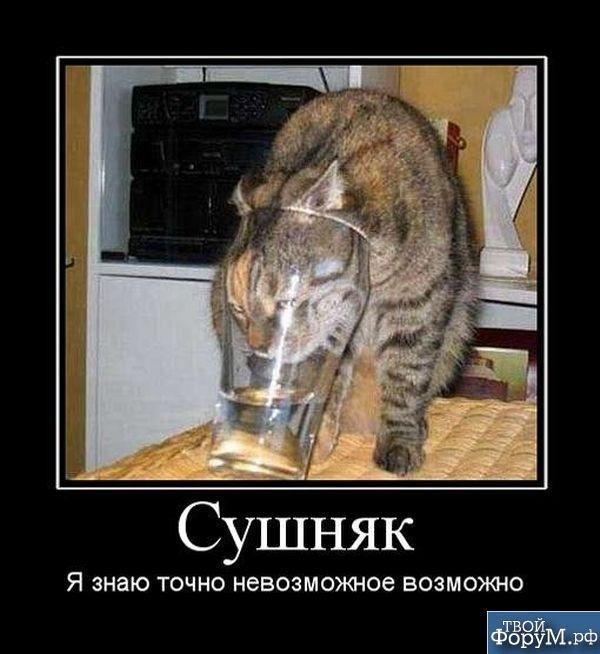 1330013769_7yvselsyg1ptihc.jpeg