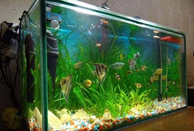 аквариум 80 литров.jpg
