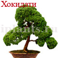 bonsai_2.jpg