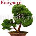 bonsai_4.jpg