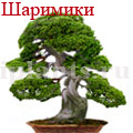 bonsai_9.jpg
