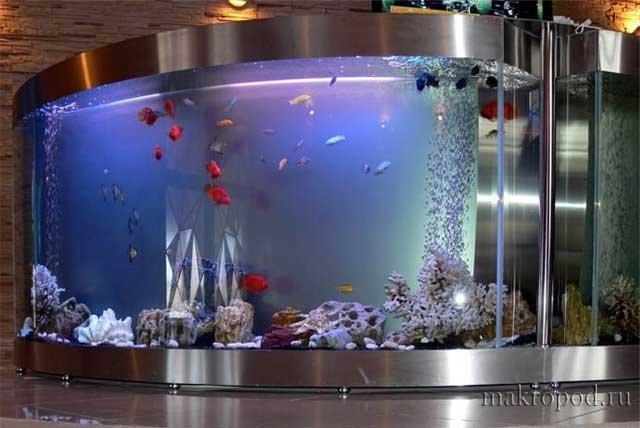 1285251380_767688_aquarium-7.jpg