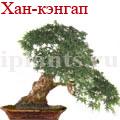 bonsai_5.jpg